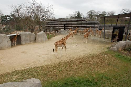 Enclos des girafes