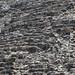 Coba Mayan Ruins_MIN 312_30_Xaibe