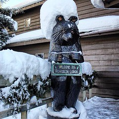 No, that's not a giant marshmallow on our bear's head.  #bearskinlodge #gunflinttrail #ridiculouslookingbear