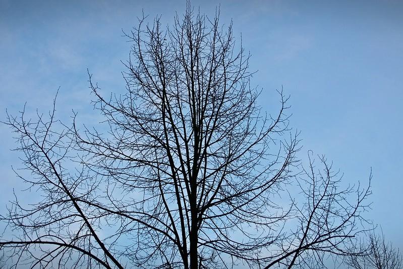 Goldengelchen-Januar-Baum