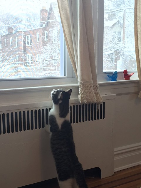 Juniper watching the snow