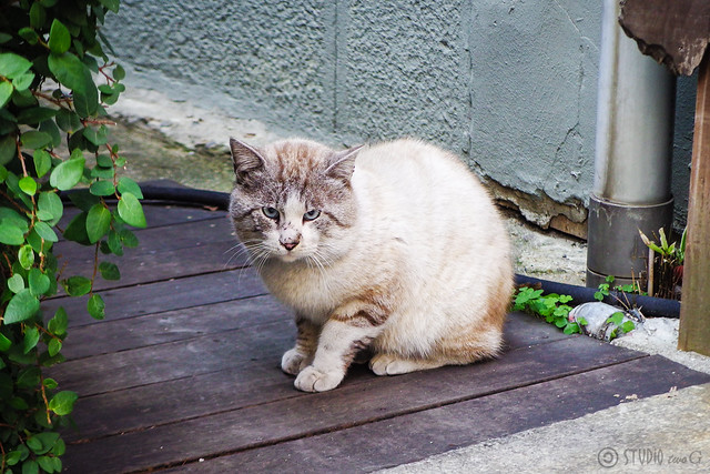 Today's Cat@2016-02-19