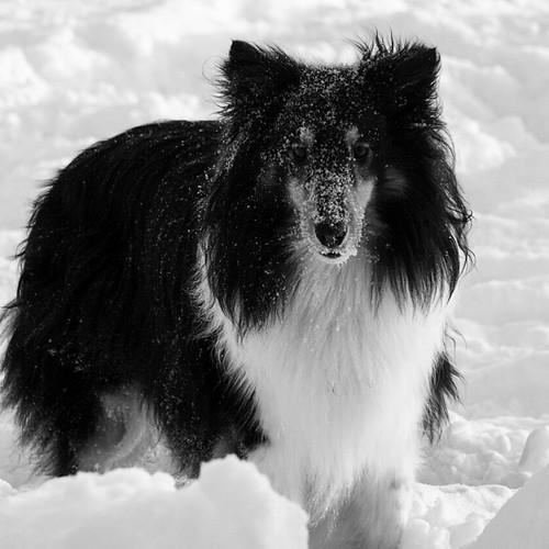 Snow dog 3+