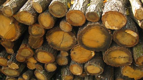 autumn macro nature log village logs