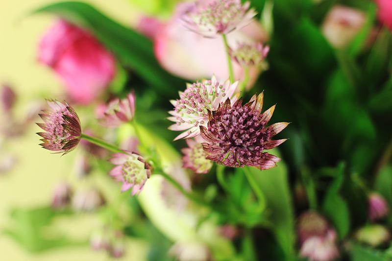 Prestige Flowers 4