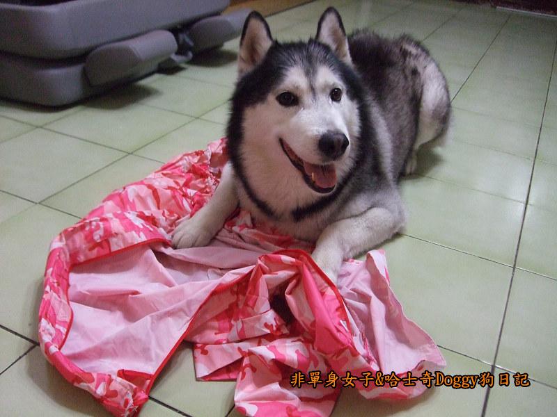 寵物雨衣迷彩服05