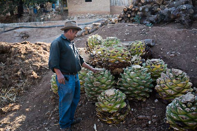 Making Mezcal in Mexico