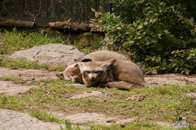 Tierpark Berlin 17.04.2016  0183