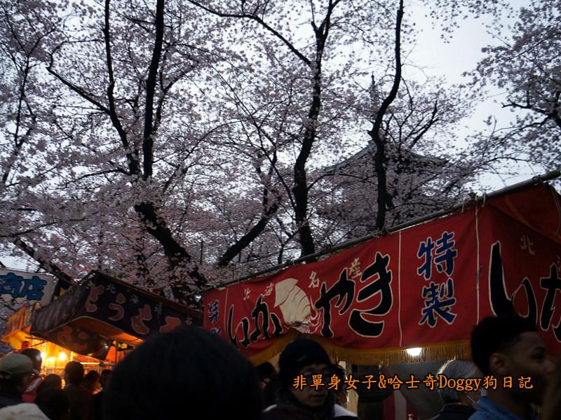 日本東京上野恩賜公園櫻花15