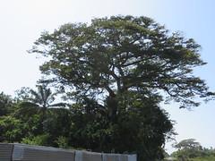 Photo of Kourou