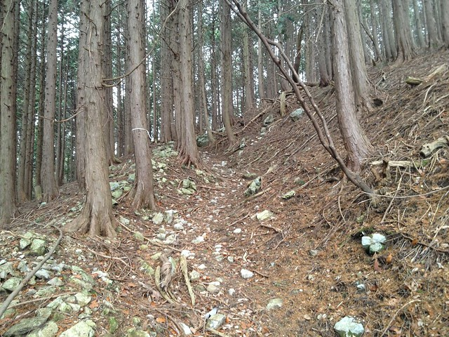 小島山 登山道 岩