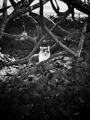 Elfie en son royaume. - Photo of Néret