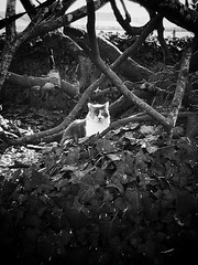Elfie en son royaume.