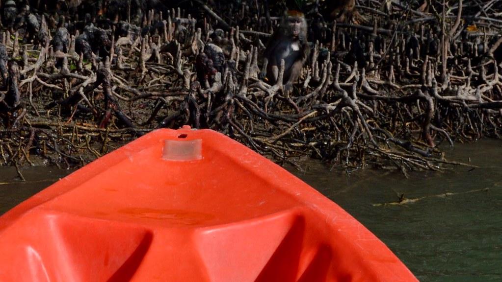 Kayaking between monkeys in Lanta