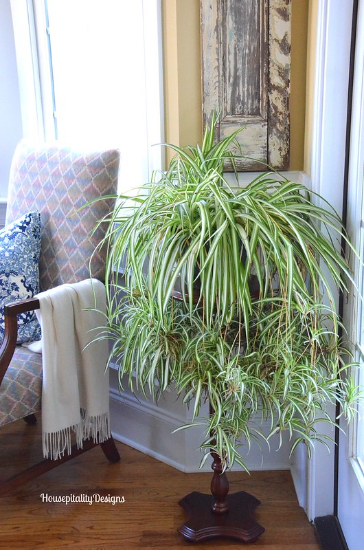 Dining Room Plant Stand - Housepitality Designs