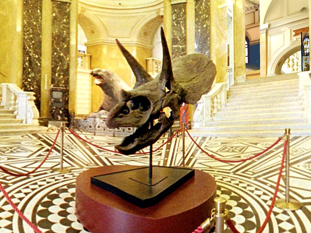 Natural History Museum of Vienna - Triceratops Hello