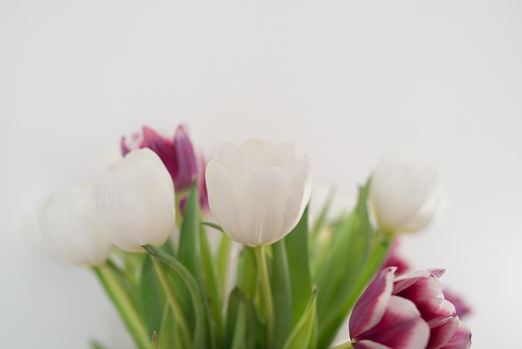 tulips 01-750