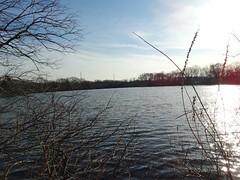 Twin Lakes preserve -South Lake - 2.22 (55)
