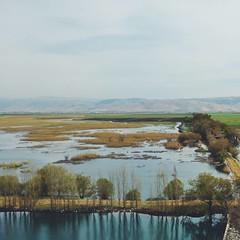 The wetlands [2/2] #lebanon #bekaa #livelovebekaa #tawletammiq #instameetbekaa #livelovelebanon #livelovebeirut #ammiq #lebanonbyalocal #lebanontraveler #wetlands #nature #naturelovers #ig_lebanon #natgeotravel