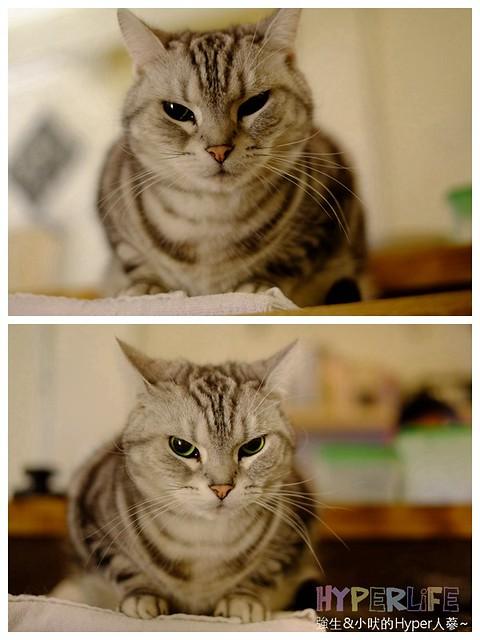 25503945813 035599e7c6 z - 超可愛貓咪寵物餐廳【巷子有貓】,逢甲巷弄無菜單美食~一定要預約才吃的到的日式家常菜!(已歇業)