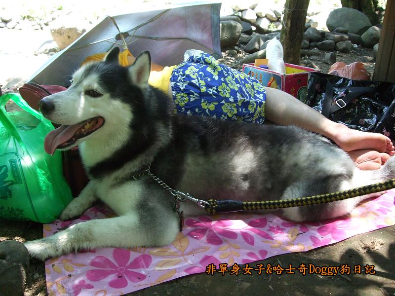 Doggy三芝八連溪09