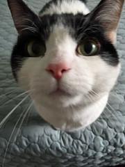 Kinsler Kitty