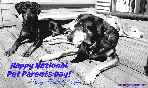 Happy National Pet Parents Day 2016 from Penny, Teutul & Sophie #NationalPetParentsDay #LapdogCreations ©LapdogCreations