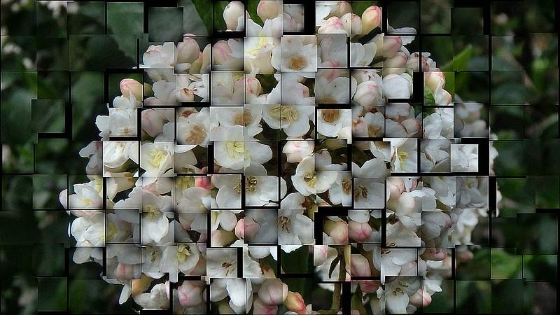 Blütenfragmente