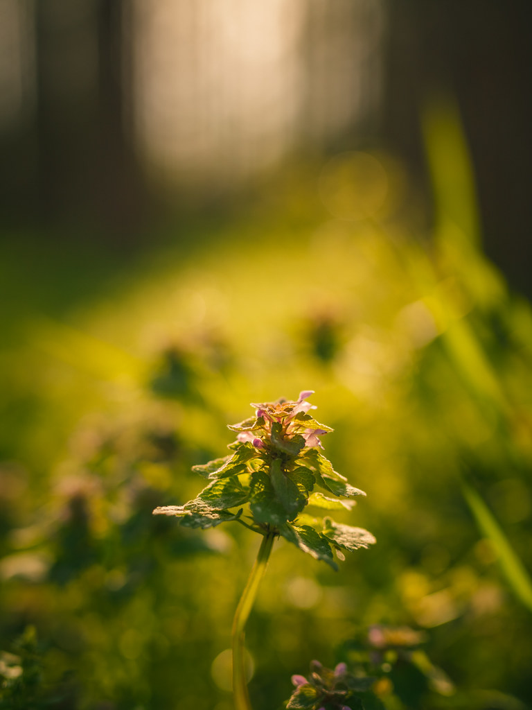 20160417_02_SIGMA 50mm F1.4 DG HSM A014 Bokeh & depth of field
