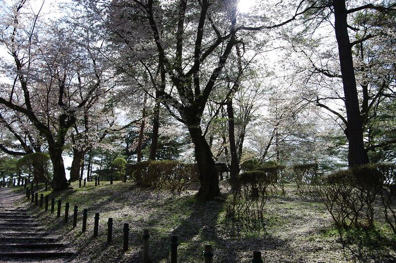 散るさくら_2016-04_NO3