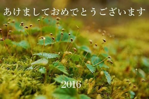 ★あけましておめでとうございます★2016年・元旦