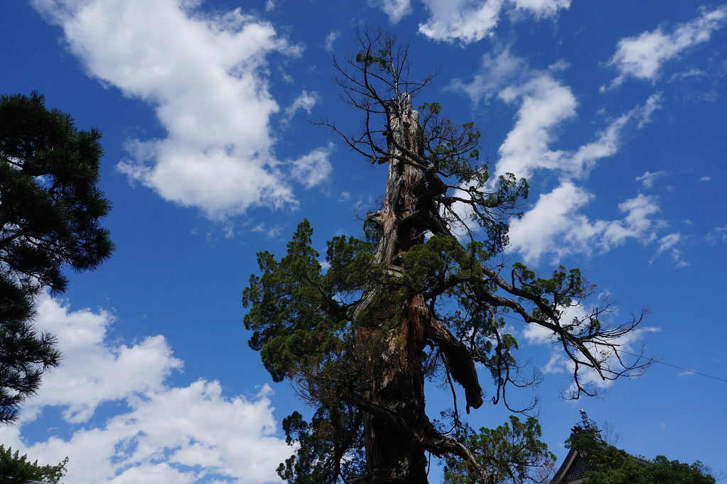 Tree in Zenkouji