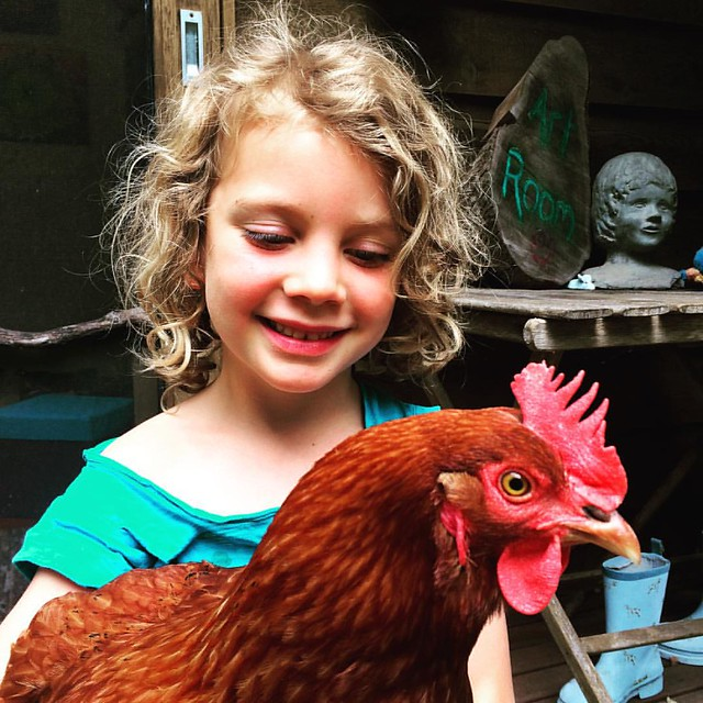 002/365 • Daisy and her latest love - Superhero the Chook • #002_2016 #housesitting #chook #5yo #Summer2016 #morningtonpeninsula