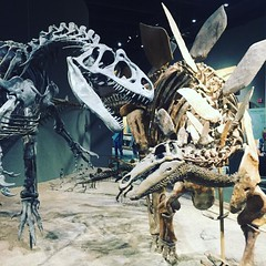 The land before time #Denver #museum #dinosaurs