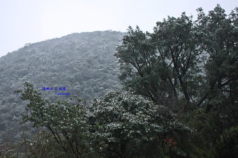 2016-台北陽明山-瑞雪-難得一見的雪白山景-17度C隨拍 (21)