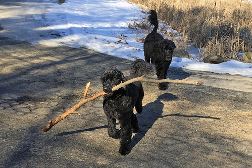 dogs with stick IMG_4835