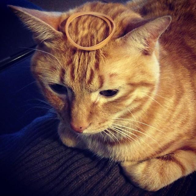輪ゴムのせ😼😼😼 #cat #cats #catsofinstagram #catstagram #instacat #instagramcats #neko #nekostagram #猫 #ねこ #ネコ# #ネコ部 #猫部 #ぬこ #にゃんこ #ふわもこ部
