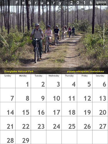 February 2016 Calendar: Long Pine Key Nature Trail, Everglades National Park @evergladesnps