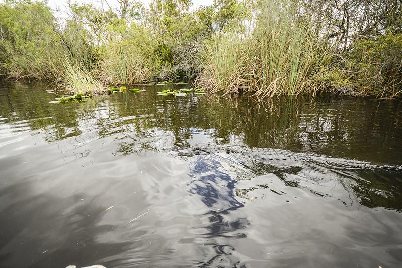 Everglades_5