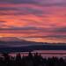 Mount Rainier dawn 3271 by billpusztai