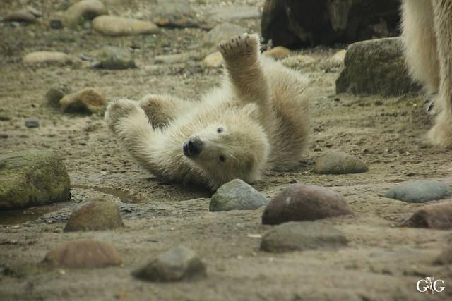 Zoo Bremerhaven 09.04.16 2.Teil13