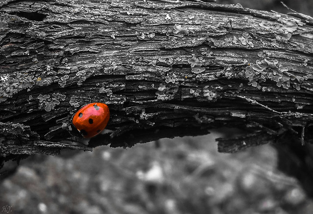 In the world of ladybug...