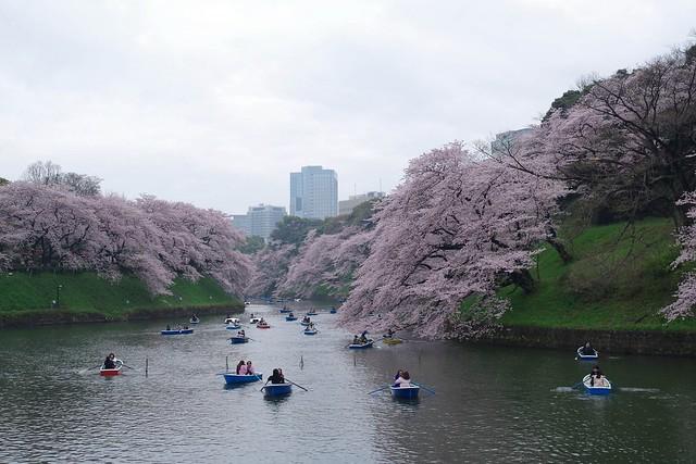 2016/04/03千鳥ヶ淵-26