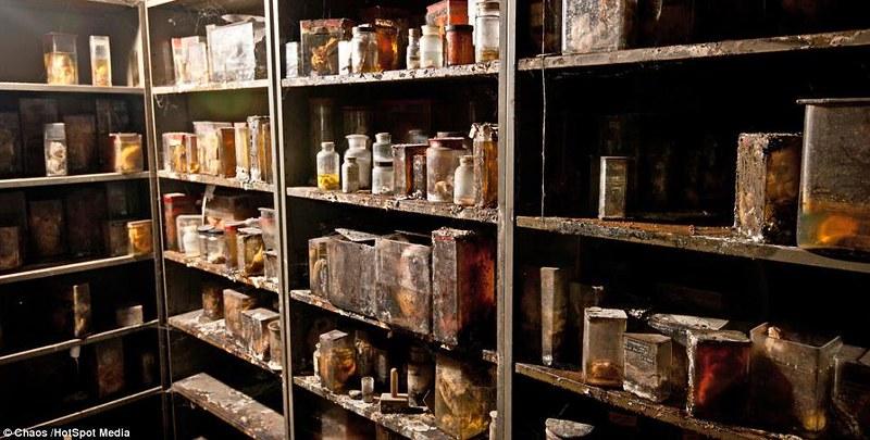 驚魂比利時「廢棄獸醫學院」福馬林的怪誕美學2