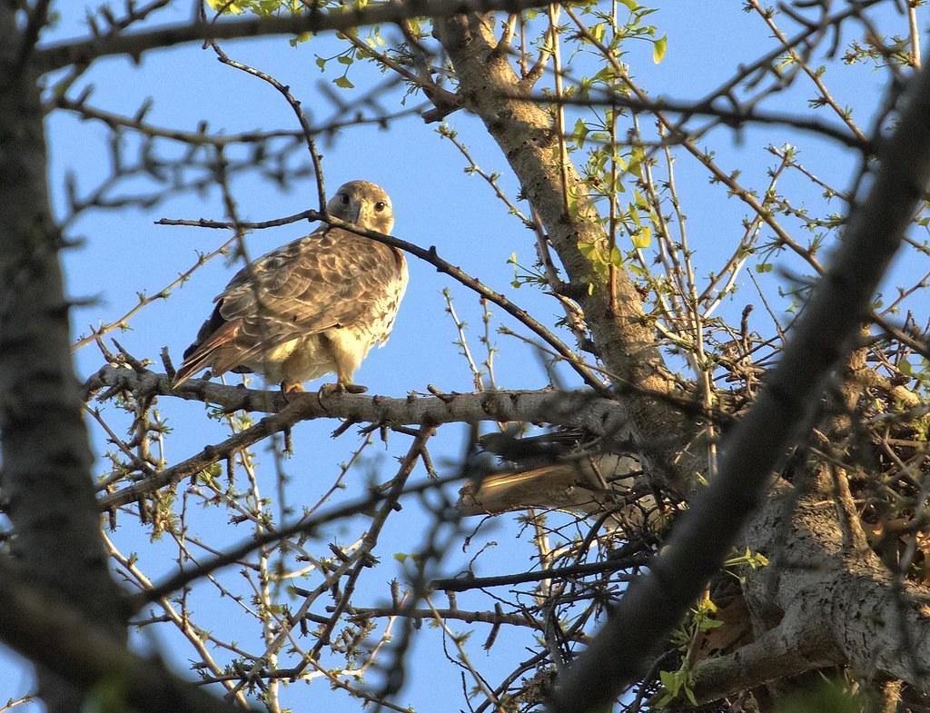 Feeding at the nest