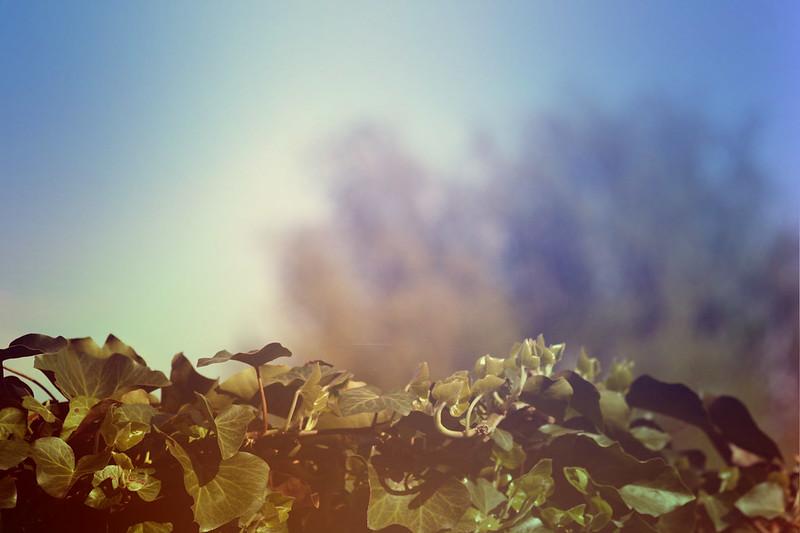 blur-dreamy-texture-texturepalace-83