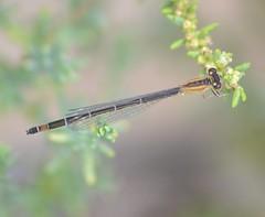 Iberian invertebrates