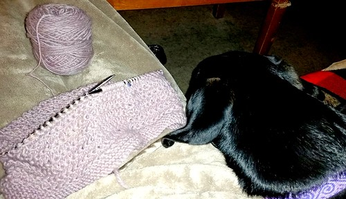 knitting with a cuddly Doberman puppy next to me - Lapdog Creations