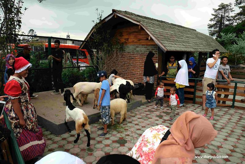 farm house lembang 16