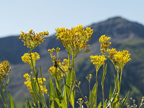landscape colorado hiking wildflowers pagosasprings olympus510